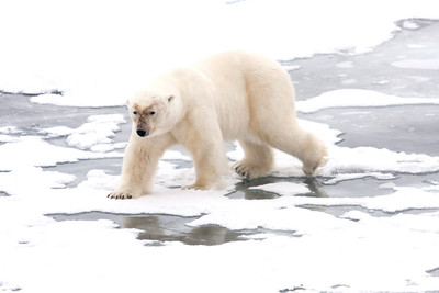 Svalbard, Norway (Arctic)