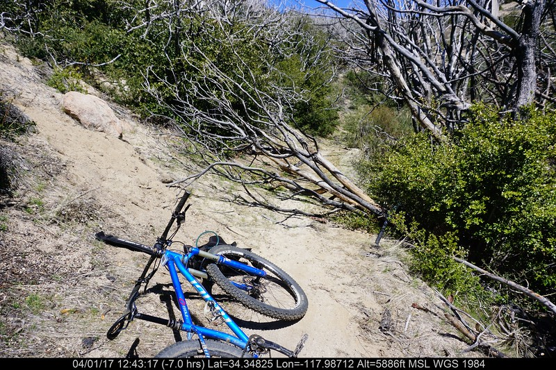 20170401034-Chilao, Hillyer, Silver Moccasin Trailwork.JPG