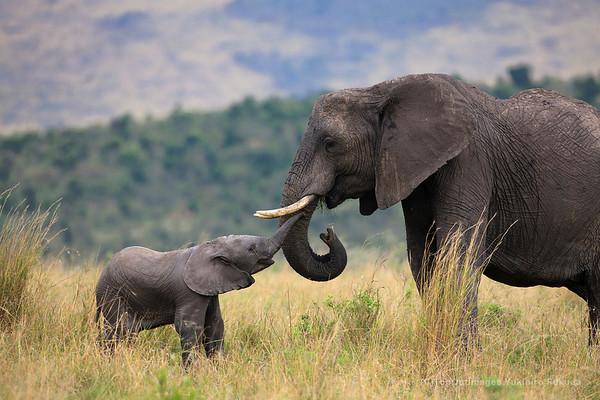 Wildilfe of Africa