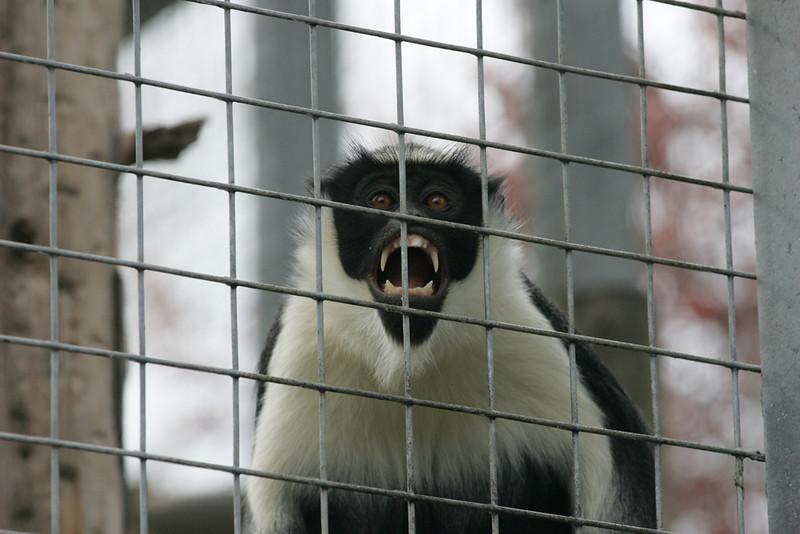 Newquay Zoo 384.jpg