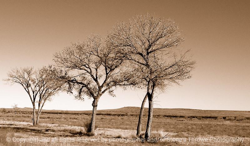 trees-bosque_del_apache_nm-01dec06-9793