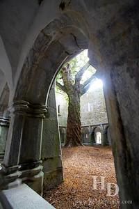 2014-07 Muckross Abbey