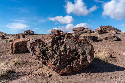 Petrified Forest National Park 2020
