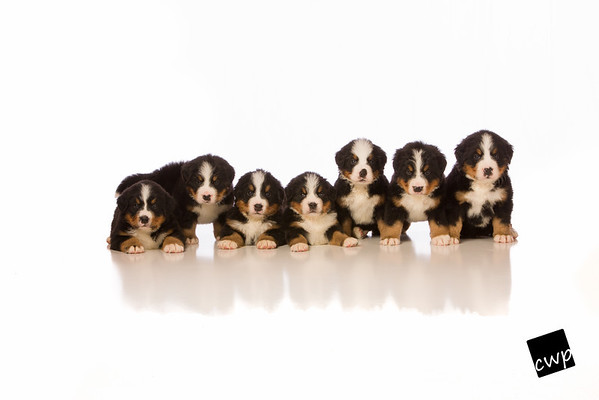 Pearson Pups