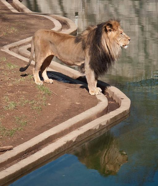 King'sReflection.jpg