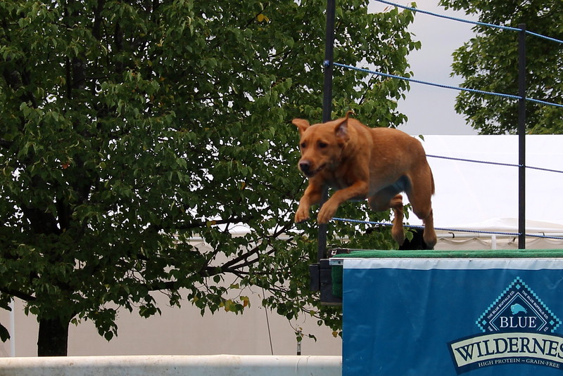 Dock Dogs at Fair-091.JPG