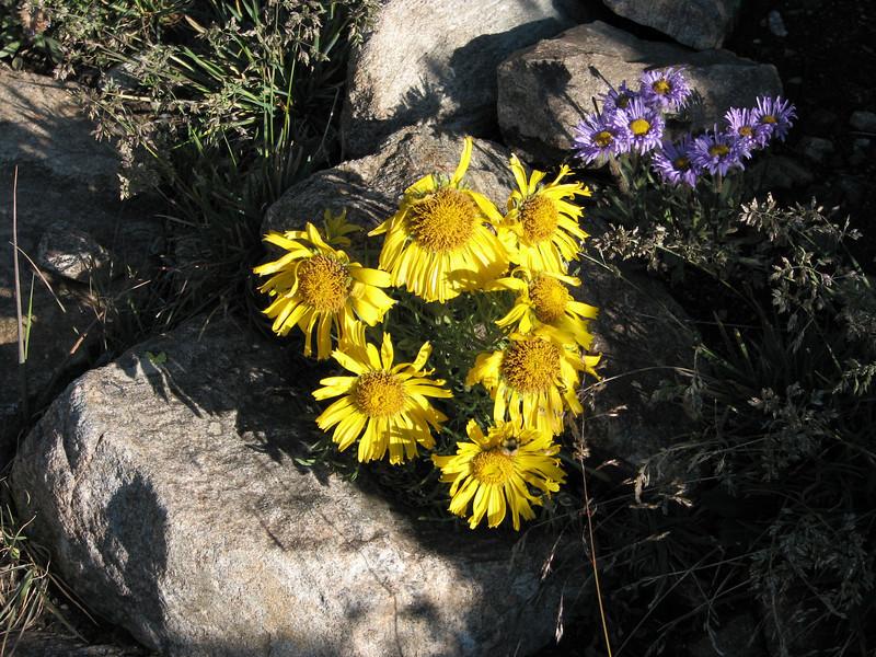 Torreys Peak 7-13-06 022.jpg
