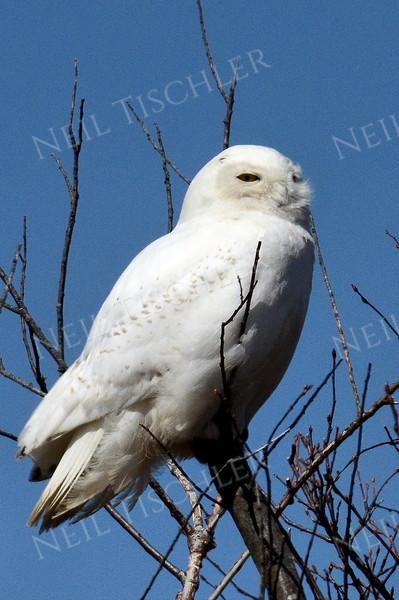 Hawks, Ospreys, Owls, Eagles, Vultures
