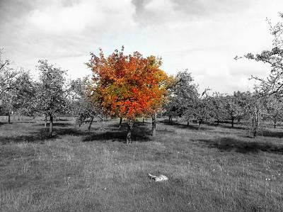 Glastonbury countryside