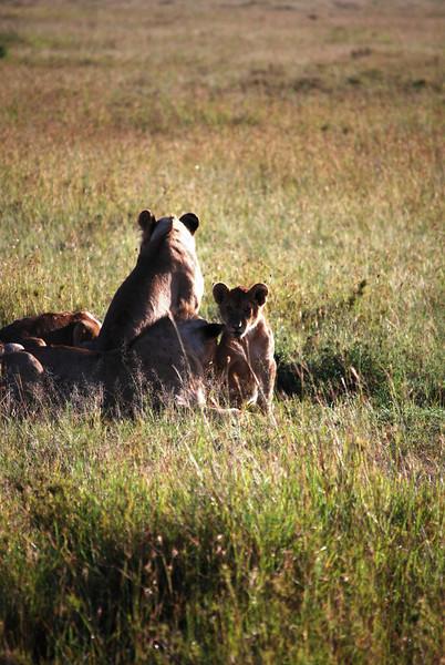 Serengeti (106).JPG