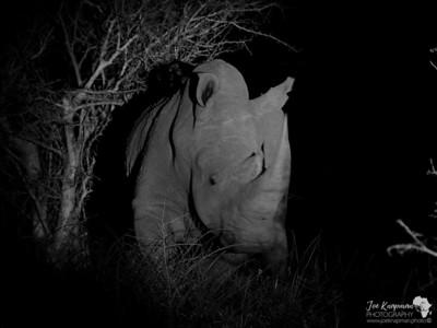 BW Rhino at Night
