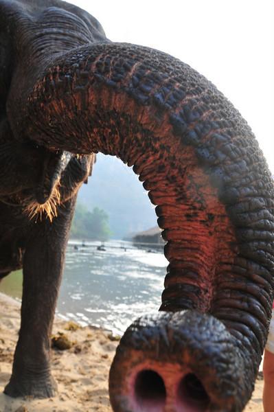 Day2 - River Kwei Elephants