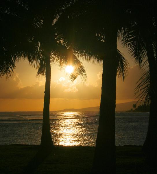 7597 Palm Silhouettes.jpg