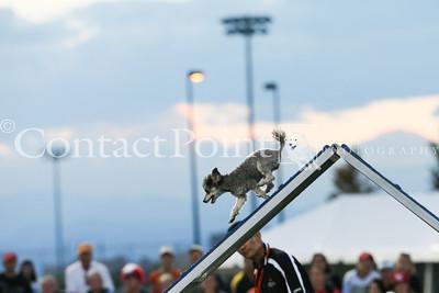 "Cynosport - Performance Speed Jumping Final 8"""
