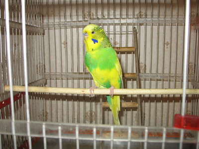 2009-03-21, Rusik the parrot