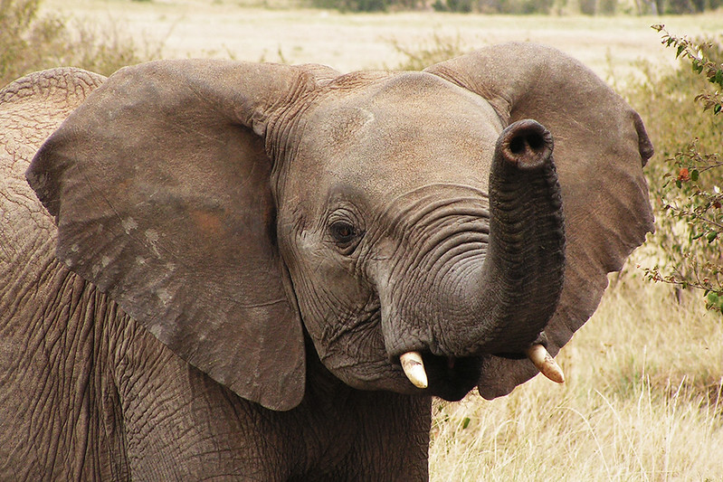 PICT1033_Masai Mara_upr1b.jpg