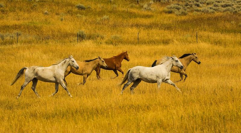 Lyn's horses 15.jpg