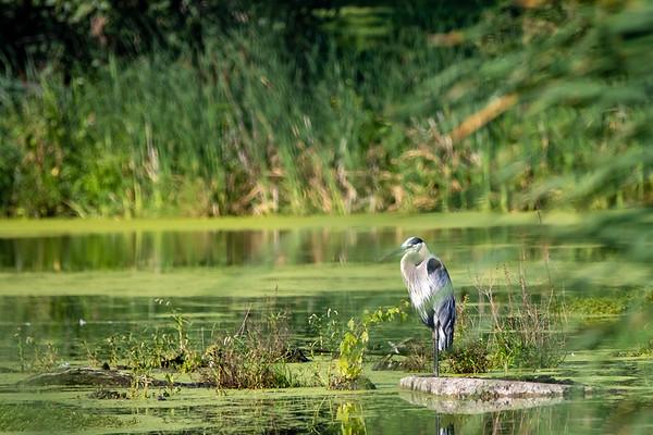 Robert H Long Nature Preserve