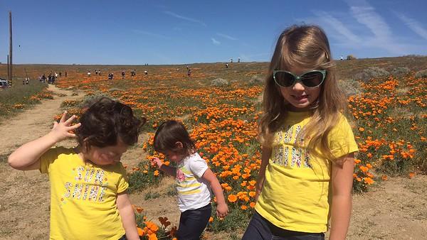 Antelope Valley Poppy's 2017