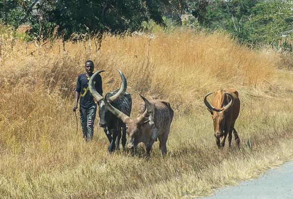 Our Own Private Tanzania