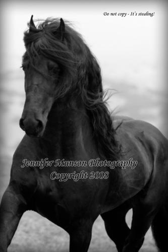 Fine Art Equine Photography