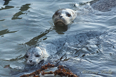 Seal Pups 2013