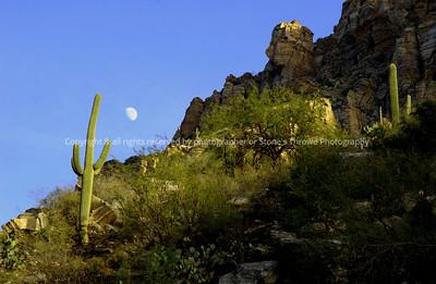 019-cactus_moon-sabino canyon_az-15dec02-0055