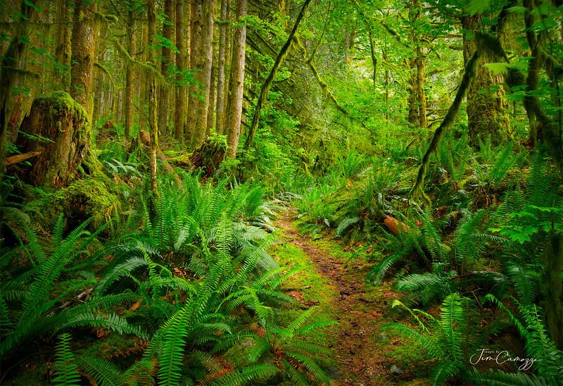 Lush Path 05024.2020