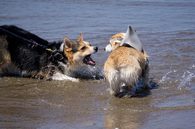 Dogs-20.jpg