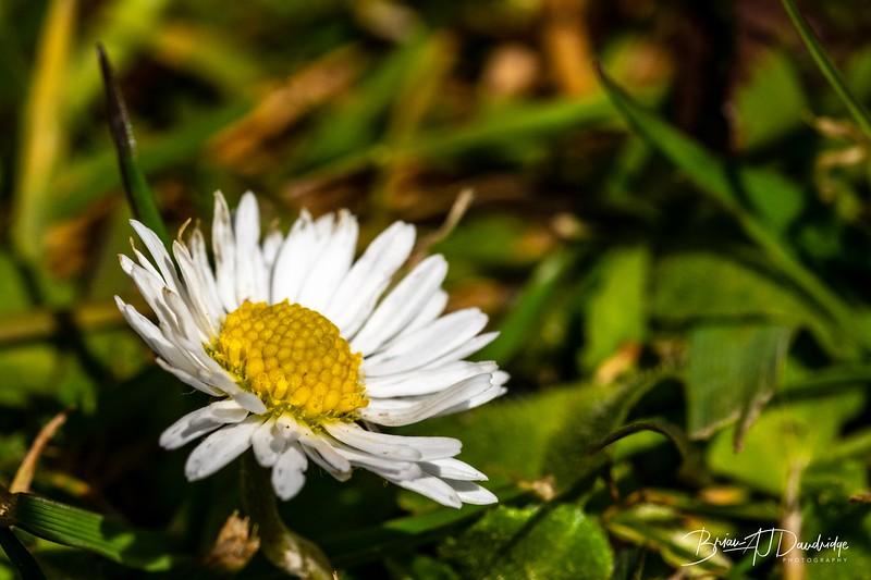 Macro_Spring-flowers-1454.jpg
