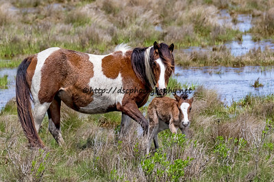 Secret Feather's Filly