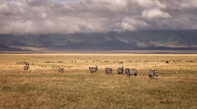 Mark-Fletcher-Zebras in the Crater.jpg