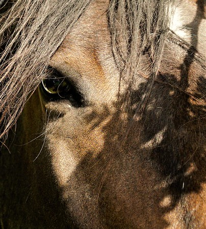 Horse Photography Wirral
