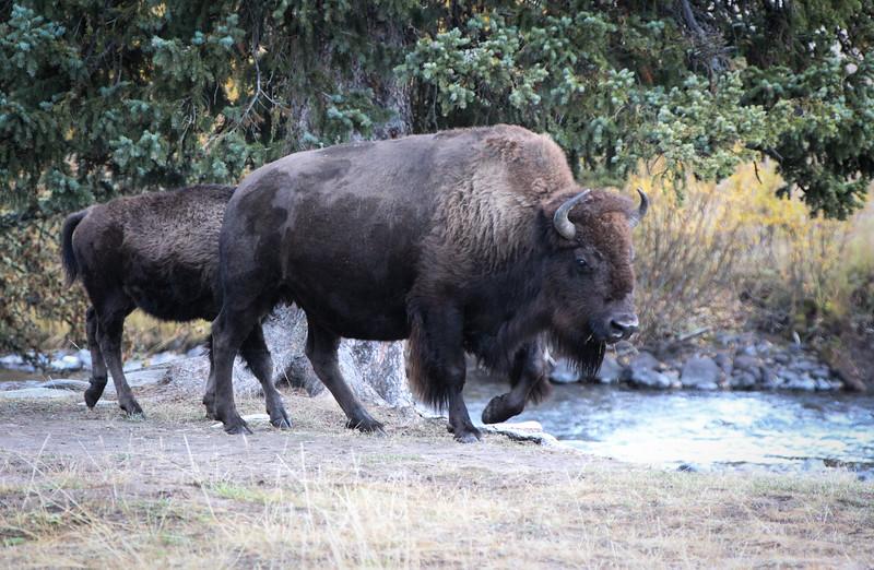 Fall Trip Wyoming & Montana 2016 (24 of 193).jpg