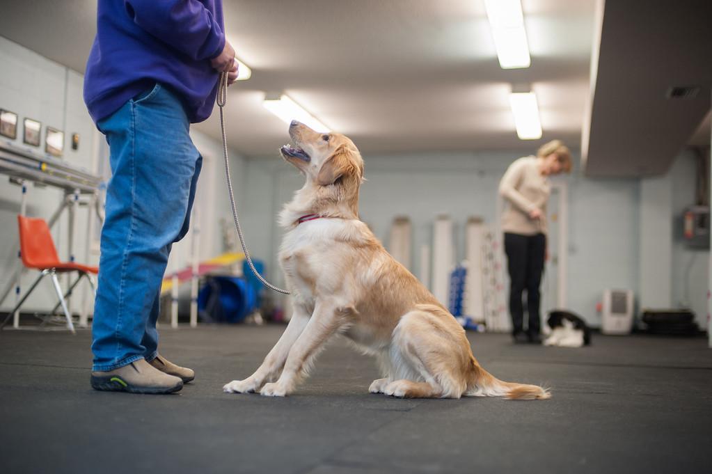 . Lori Lickly and Keifer work on canine etiquette at the Mt, Pleasant Michigan Kennel Club in Mt. Pleasant on Thursday, Feb. 6, 2014. (Sun photo by Holly Mahaffey/@hollymahaffey)