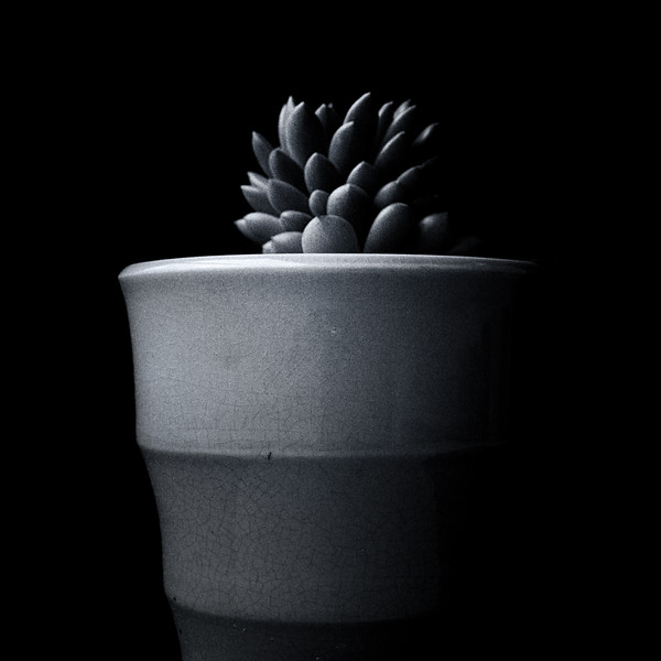 succulent Ilford 400 051420-.jpg