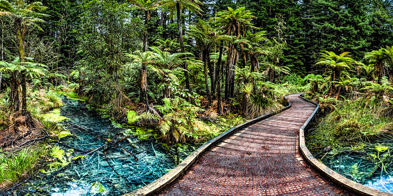 Board walk across the old thermal pond - The Redwoods