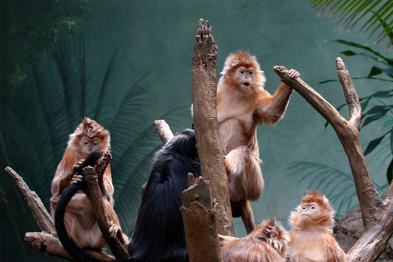 I love this monkey's face. Bronx Zoo.