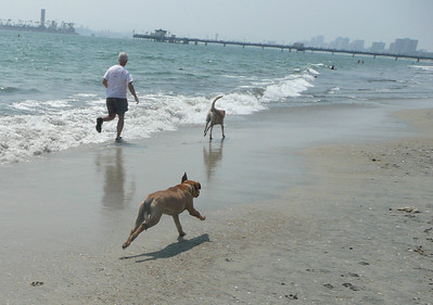 Pups' First Day at the Beach