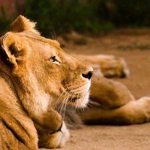 Los Angeles Zoo: Large Animals