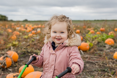 Arabella - Pumpkin Mini 2019