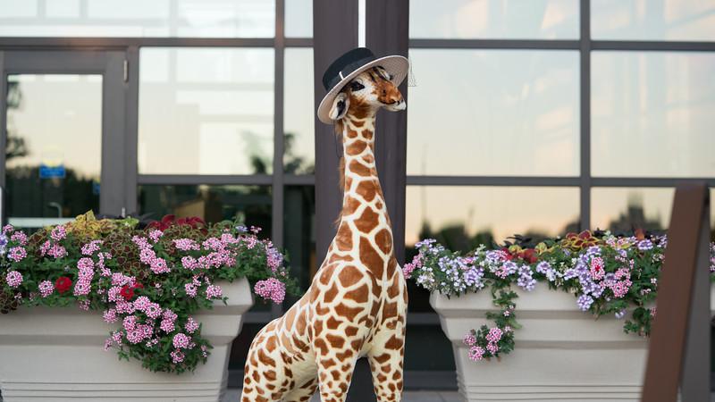 Giraffe-3123.jpg