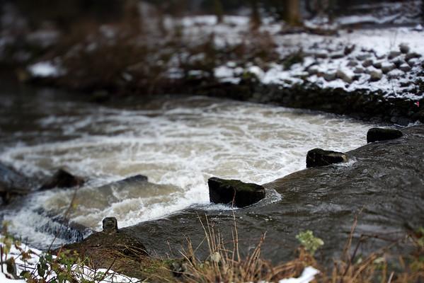Brunette River Conservation Area, January 21, 2012