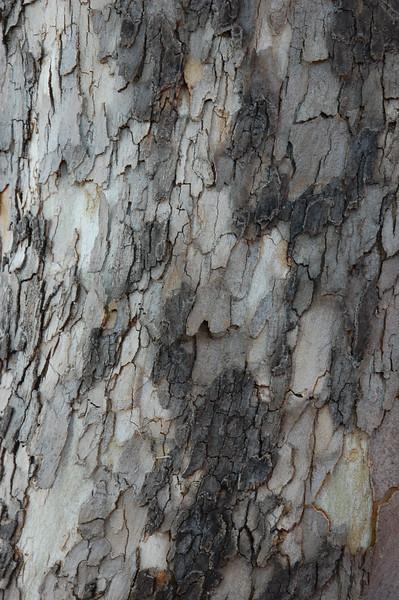 tree_bark.jpg