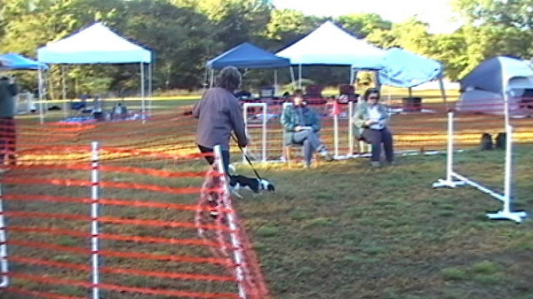 2010-10-02 CPE Agility Video Clips