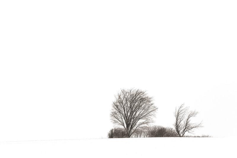 TreesOnAHill.jpg