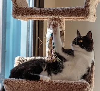 New Cat Climbing Frame
