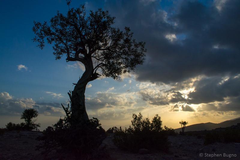 Jebel Akhdar-0692.jpg