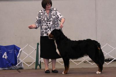 12-15 Puppy Dog