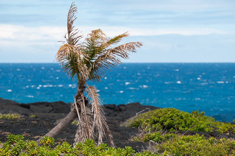 Lonely Palm Tree at Sea Shore